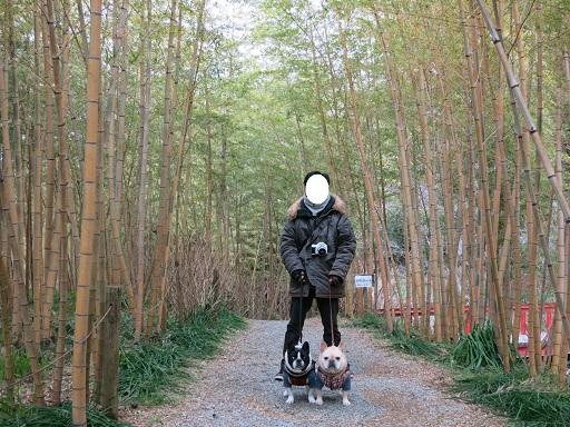 3-11竹林