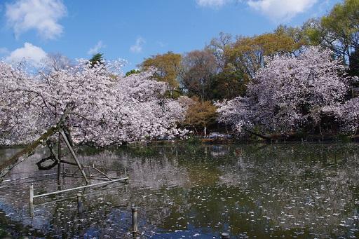 4-10池の景色