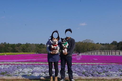 4-18芝桜家族1