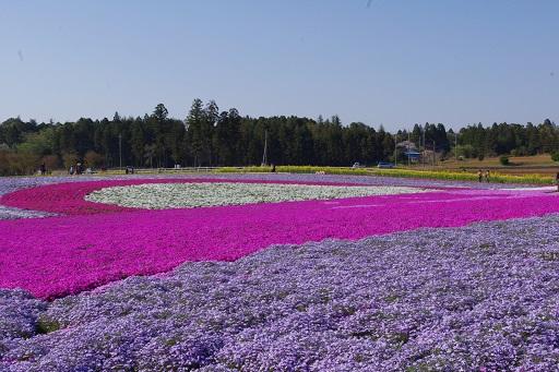 4-18芝のアート花