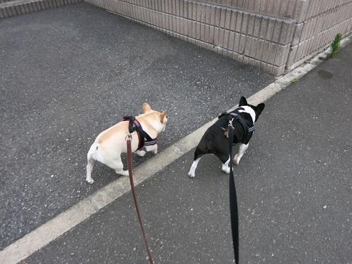 6-9ふるうた歩く