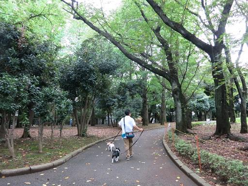 9-5公園散歩