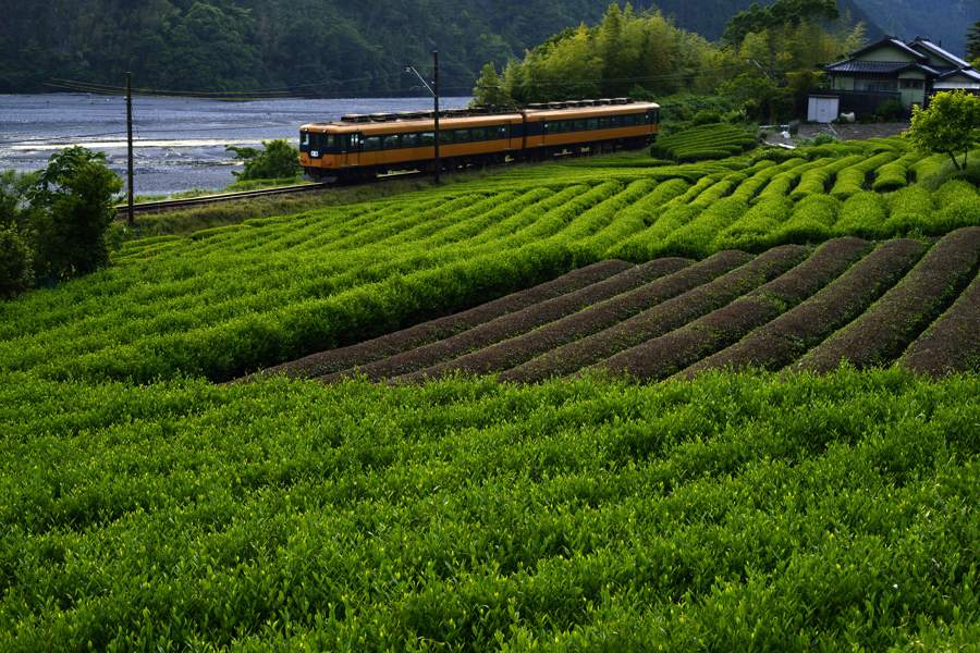 oigawa201405_328b.jpg