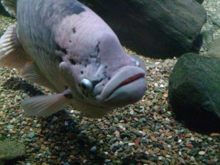 受け口の魚