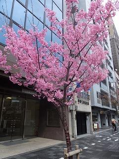 京都市役所・府庁260327 005