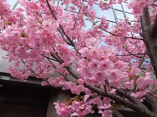京都市役所・府庁260327 007