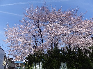 ももやま・京都府小中学校校長会・御香宮260331 001