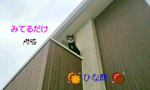 P1003651_20140814112922810.jpg