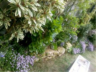 スワニー庭2