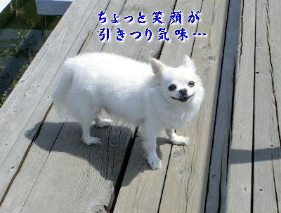 140623-銀ちゃん橋の上-3