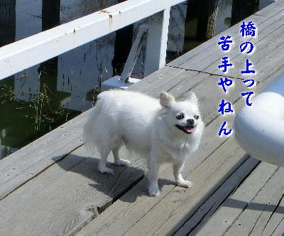 140623-銀ちゃん橋の上-2
