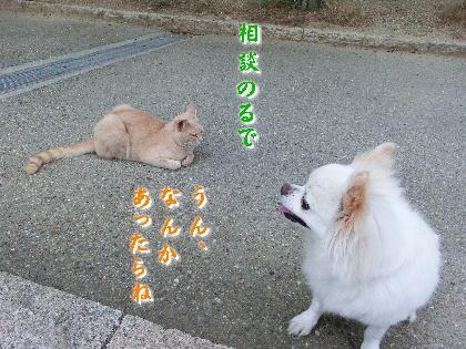 140701-銀ちゃんと野良-5