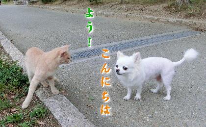 140701-銀ちゃんと野良-1