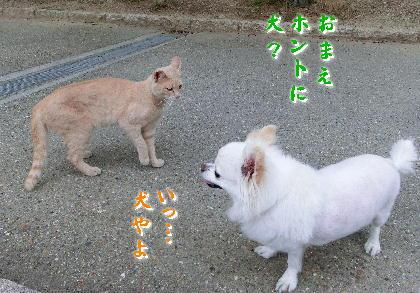 140701-銀ちゃんと野良-2
