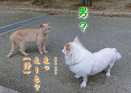 140701-銀ちゃんと野良-3