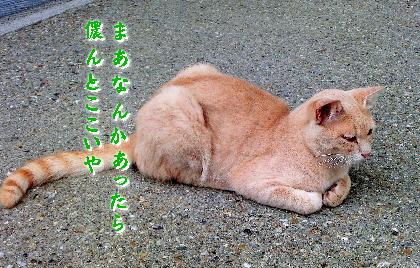140701-銀ちゃんと野良-4