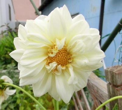 140714-我が家の花-3