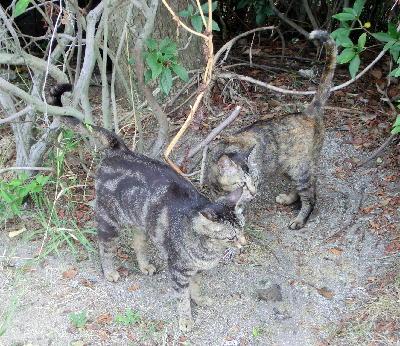 140714-野良猫1-4