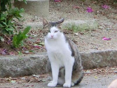 140715-野良猫2-2