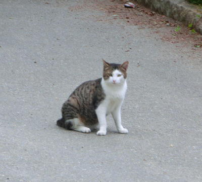140715-野良猫2-1