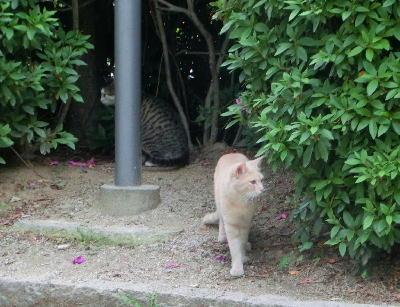 140715-野良猫2-4