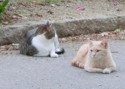 140715-野良猫2-6