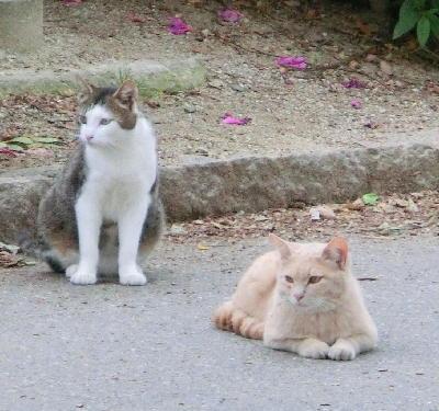 140715-野良猫2-8