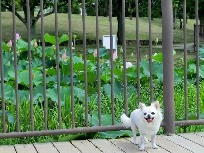 140712-白鷺公園-15