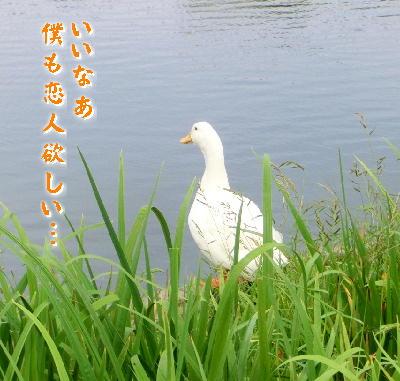 140712-白鷺公園-18