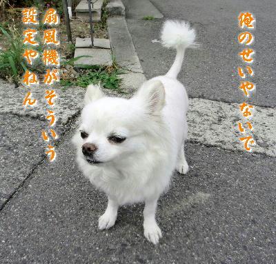 140713-銀ちゃんお散歩1-1