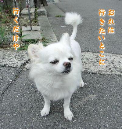 140713-銀ちゃんお散歩1-2