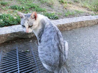 140723-野良猫さん-2