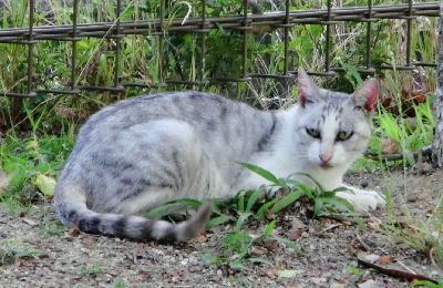 140723-野良猫さん-8