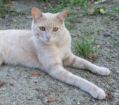 140723-野良猫さん-4