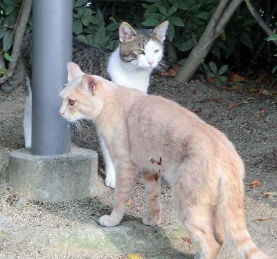 140723-野良猫さん-5