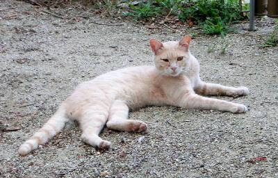 140731-野良猫さん2-4