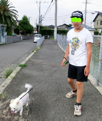 140813-甥1号銀ちゃんと散歩-2