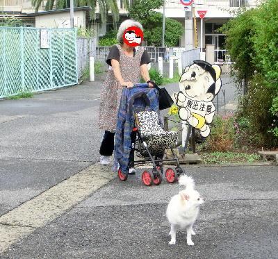 140817-銀ちゃん母とお散歩-1