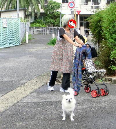 140817-銀ちゃん母とお散歩-2