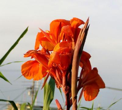140819-船渡池公園の花-1