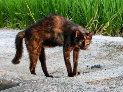 140821-野良ネコさん-1