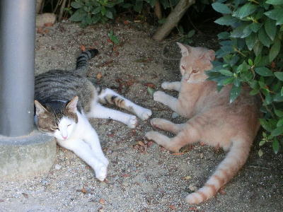 140821-野良ネコさん-2