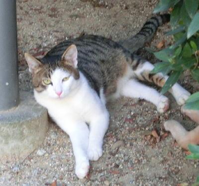 140821-野良ネコさん-3