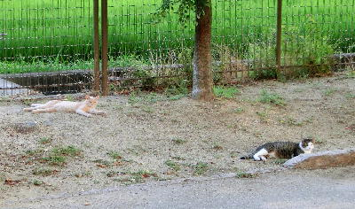 140821-野良ネコさん-4
