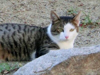 140821-野良ネコさん-5