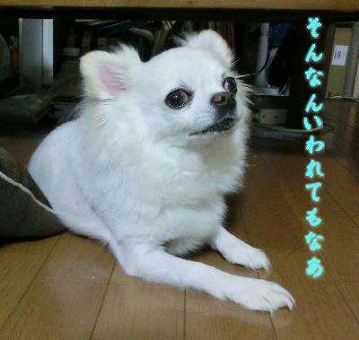 140821-銀ちゃんおでんの下-1