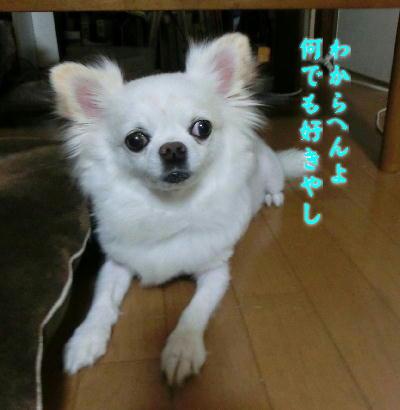 140821-銀ちゃんおでんの下-3