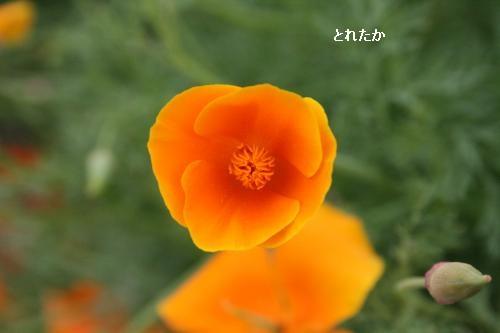 IMG_1636_convert_20140526222156.jpg