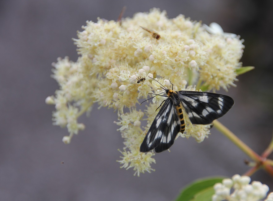 高山植物と蝶