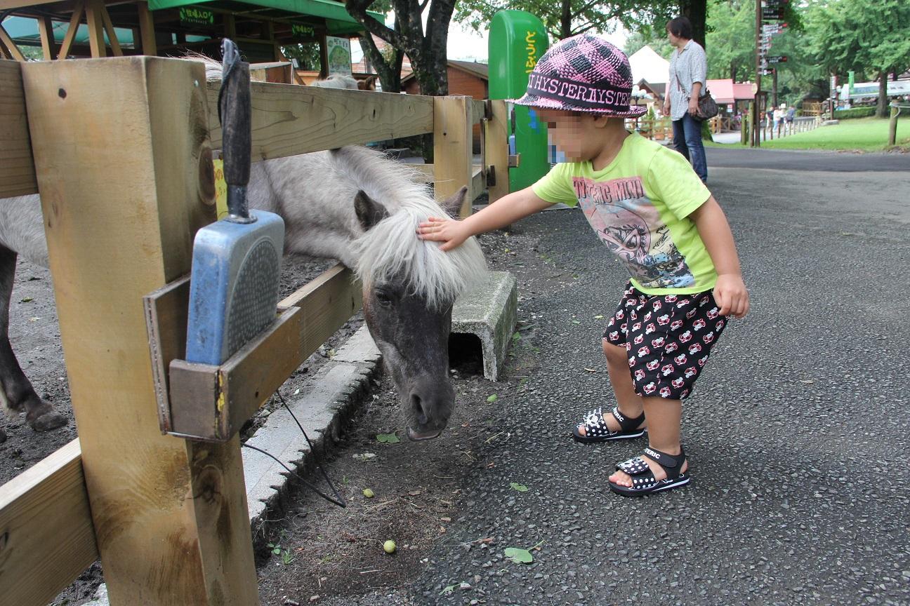 馬と触れ合い